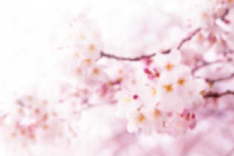 春から探す